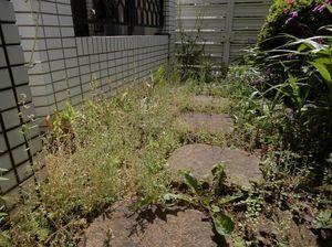 世田谷草取り1.jpg