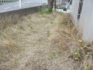庭手入れ1−1.jpg