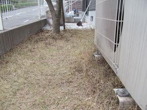 庭手入れ1−2.jpg
