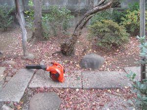 庭掃除前.jpg