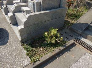 霊園清掃2.jpg