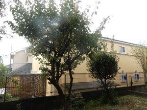 庭木剪定3−1.JPG.jpg